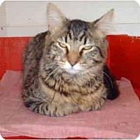 Adopt A Pet :: Hannibal - El Cajon, CA