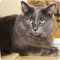 Adopt A Pet :: Smokey - Nolensville, TN