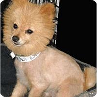 Adopt A Pet :: Jasper - Mooy, AL