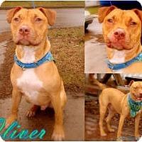 Adopt A Pet :: Oliver - Sylvania, OH