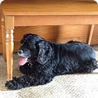 Adopt A Pet :: Maxi - Santa Barbara, CA