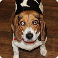 Adopt A Pet :: Pennie - Dumfries, VA