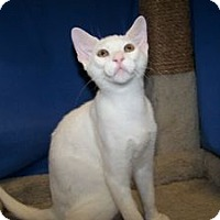 Adopt A Pet :: K-BARC2-Arnie - Colorado Springs, CO