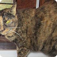 Adopt A Pet :: Jessica - Witter, AR