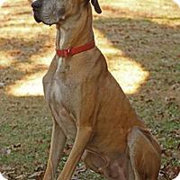 Adopt A Pet :: Cosmo - Austin, TX