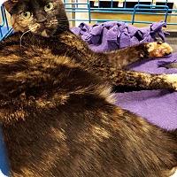 Adopt A Pet :: Sophie - Arcadia, CA