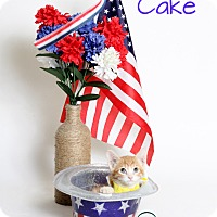 Adopt A Pet :: Tart Cake - Covington, LA