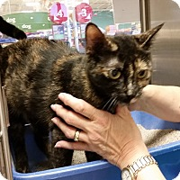 Adopt A Pet :: Halo (in CT) - Manchester, CT