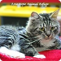 Adopt A Pet :: Luddy - Waterbury, CT