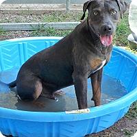 Adopt A Pet :: Remington - Manning, SC