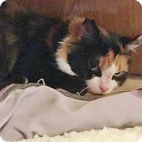 Adopt A Pet :: Plum - Salisbury, MA