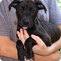 Adopt A Pet :: Mookie - Rockingham, NH