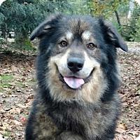 Adopt A Pet :: Taz - Capon Bridge, WV