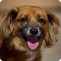 Adopt A Pet :: Bonita - Westminster, CA