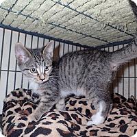 Adopt A Pet :: Jupiter - North Wilkesboro, NC