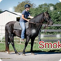 Adopt A Pet :: Holiday Special-Smokey for $50 - Nicholasville, KY