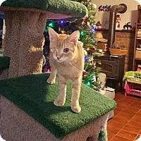 Adopt A Pet :: Cheddar (foster care) - Waco, TX