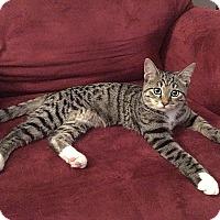Adopt A Pet :: Petunia Poopanelli - Tampa, FL