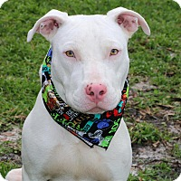 Adopt A Pet :: Most Handsome dog in Town!!! - Ft Myers Beach, FL