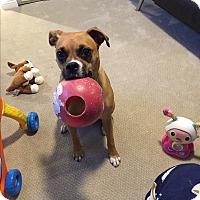 Adopt A Pet :: Gavi - Hawthorne, CA