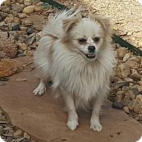 Adopt A Pet :: Gidget - Snyder, TX