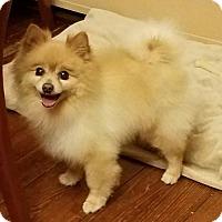 Adopt A Pet :: Oakley - Harrisburg, PA