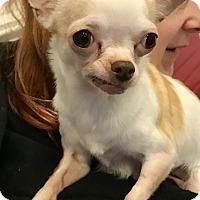 Adopt A Pet :: Peaches - Seattle, WA