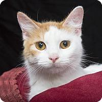 Adopt A Pet :: Madellaine - Nashville, TN