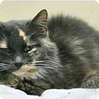 Adopt A Pet :: Kally - Los Angeles, CA