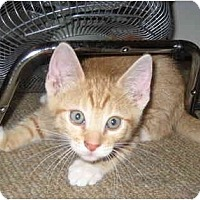 Adopt A Pet :: Apollo - Davis, CA