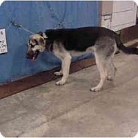Adopt A Pet :: Gizmo - Zanesville, OH