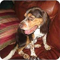 Adopt A Pet :: Coop - Phoenix, AZ