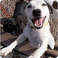 Adopt A Pet :: Casper - Glenpool, OK