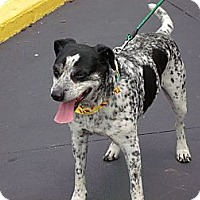 Adopt A Pet :: Specks - Somerset, KY