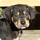 Adopt A Pet :: Tater Tot G~B