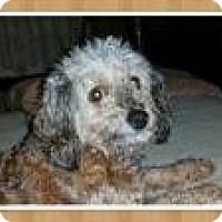 Adopt A Pet :: Hannah (Brynne) - Mount Gretna, PA