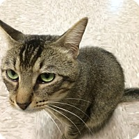 Adopt A Pet :: Lynx - Byron Center, MI