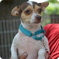 Adopt A Pet :: Molly - Daleville, AL