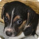 Adopt A Pet :: Clark