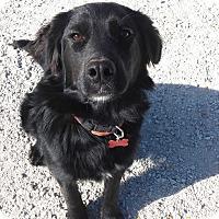 Adopt A Pet :: Penny - Chewelah, WA