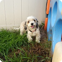 Adopt A Pet :: Betty - West Deptford, NJ