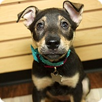Adopt A Pet :: Hydra - Detroit, MI