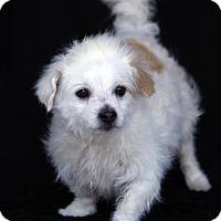 Adopt A Pet :: Spot - SAN PEDRO, CA