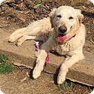 Adopt A Pet :: Bella Victoria