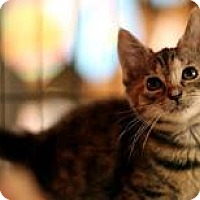 Adopt A Pet :: Brown Betty - New York, NY