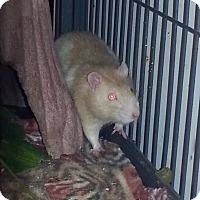 Adopt A Pet :: Williard - St Johns, FL
