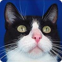Adopt A Pet :: Bon Bon - Sherwood, OR