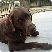 Adopt A Pet :: Zeke - Clovis, CA
