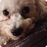 Adopt A Pet :: Blondie - Hazel Park, MI