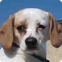 Adopt A Pet :: Smokey - Canoga Park, CA